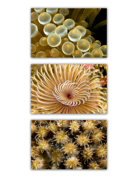 ABSTRACT SEA :: YELLOW 