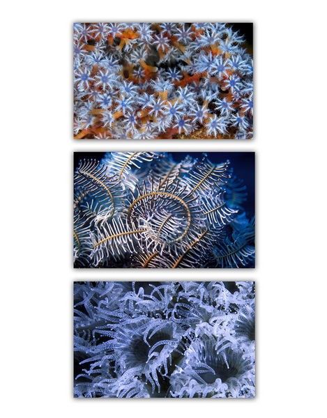 ABSTRACT SEA :: BLUE 