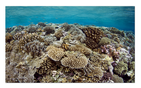 Coral Reef :: Lucipara Atoll . Indonesia