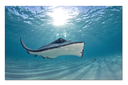 First Ray :: Gibbs Cay . Turks and Caicos Islands