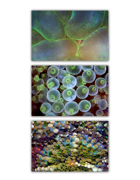 ABSTRACT SEA :: GREEN 