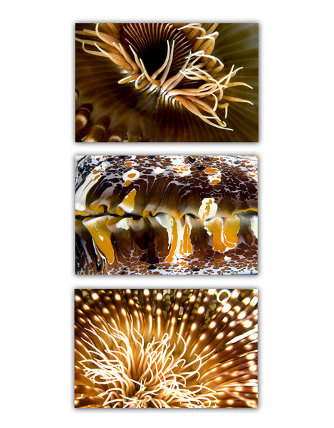 ABSTRACT SEA :: BROWN