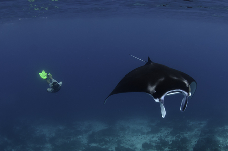 Ali and Manta :: Raja Ampat . Indonesia