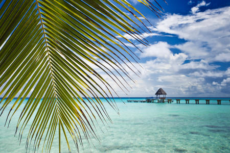 Under the frond : Rangiroa