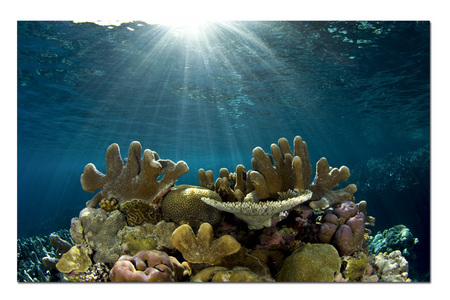 Morning Reef :: Russel Islands . Solomons